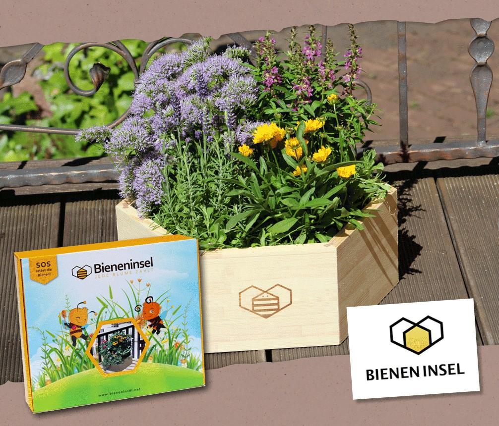 Die Bieneninsel - Verpackung und aufgebaut