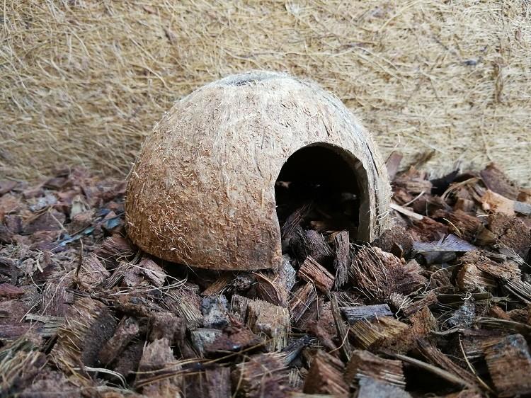 Kokoshöhle Nagerhöhle Laichhöhle Tierversteck - 1/2 Kokosnuss - 3er-Set