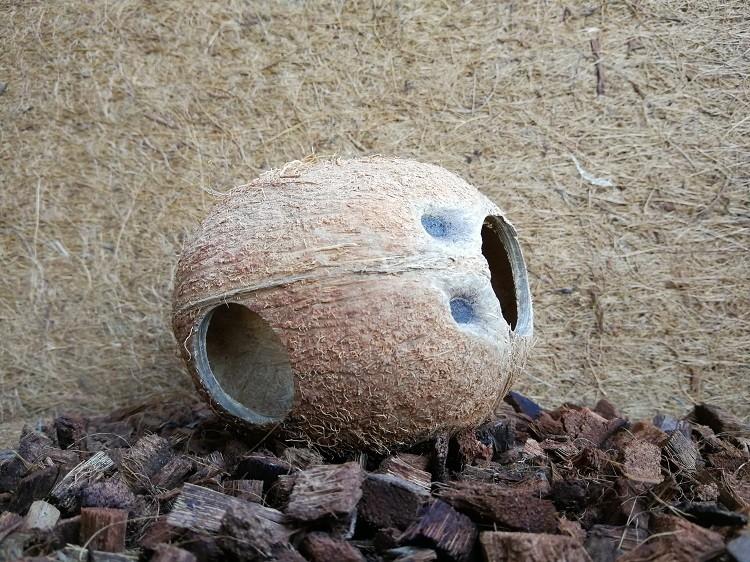 Kokoshöhle Nagerhöhle Laichhöhle Tierversteck - 1/1 Kokosnuss - 3er-Set