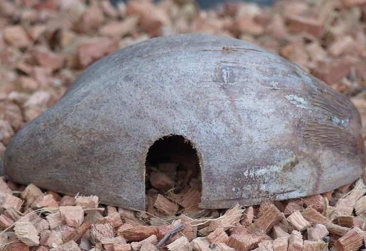 Tierhöhle mit Husk - längs