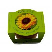 Proflora Saatset Sonnenblume 2