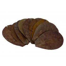 Seemandelbaum Blätter M - 16-20 cm - 30 Blätter = 3 Beutel