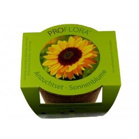 ProFlora - Anzuchtset Sonnenblume - Die Natur erleben!