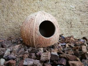 Kokoshöhle Nagerhöhle Laichhöhle Tierversteck - 3/4 Kokosnuss - 3er-Set