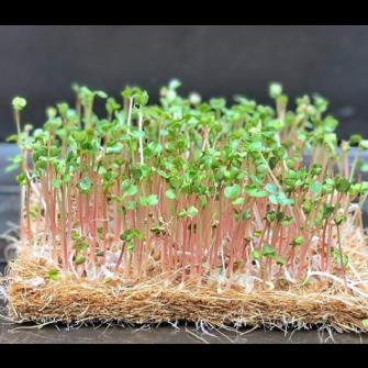 Kokosmatte Anzuchtvlies Kressematte - Microgreen Zuschnitt 28 x 48 cm - Set von 10 Stück