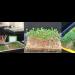 Kokosmatte - Anzuchtvlies - Microgreens - 2